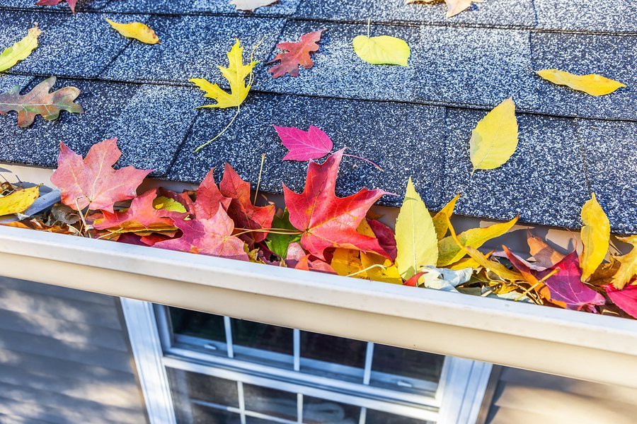 fall leaves on a roof